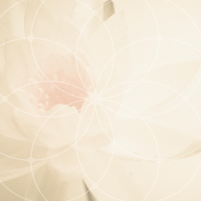 Lotus_lifeactivation